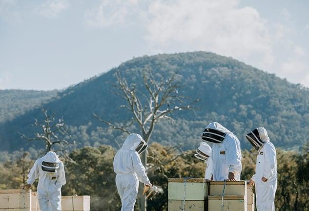 Learn-About-Beekeeping-2-Gateway