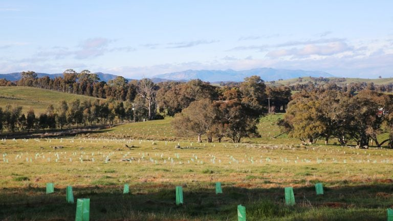 Planting the Beechworth Honey Bee Arboretum