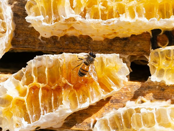 Learn-About-Bees