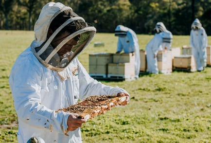 Learn-About-Honey-Beekeeping-Nav