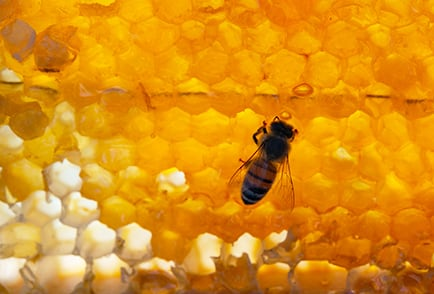Learn-About-Honey-Bees-Nav