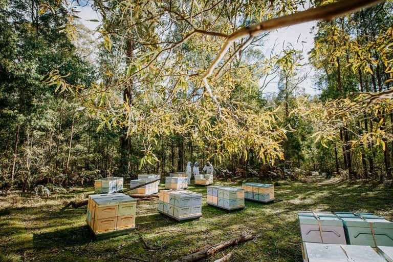 Learn_About_Honey_Hives_Trees