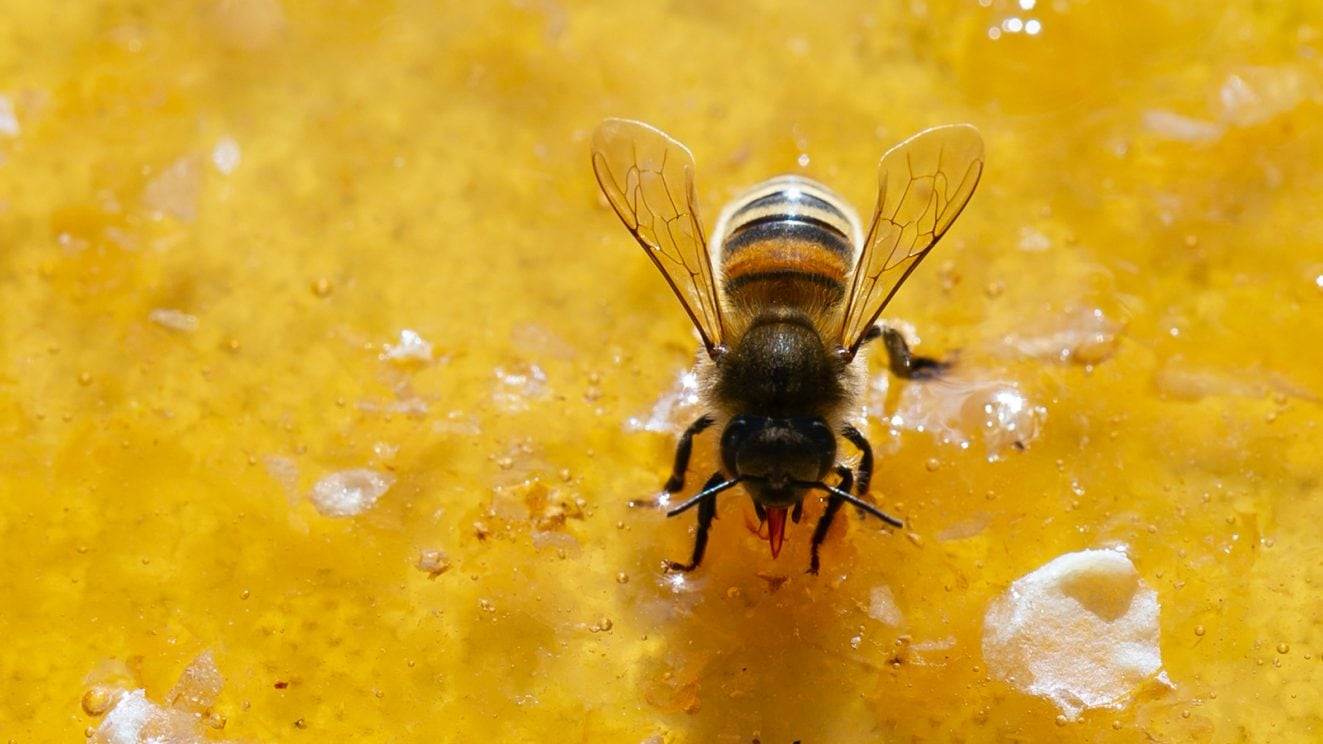 Learn_About_Raw_Honey
