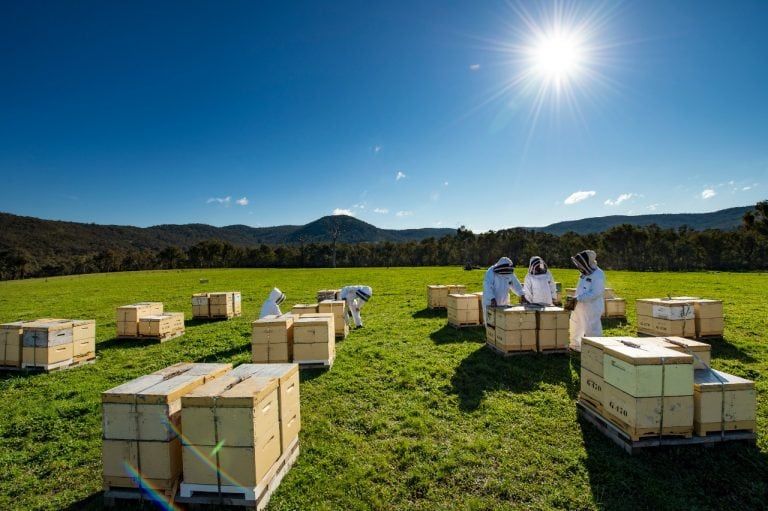 Beekeepers checking the hives