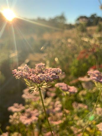 Sunlight Scout's Garden