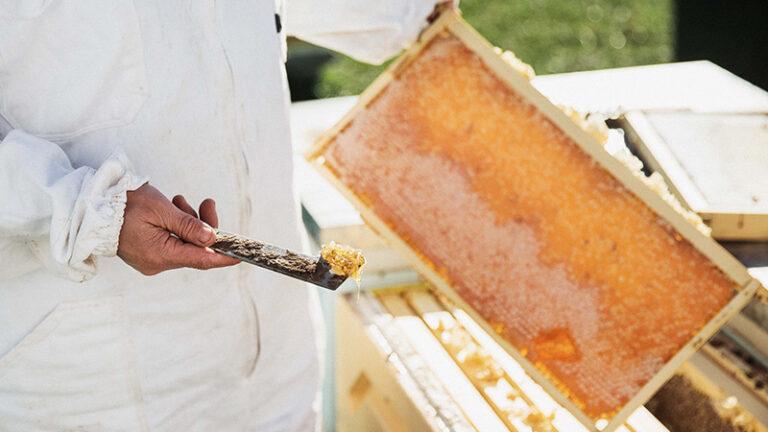 Feeding-Bees-2